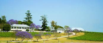 Albert River Winery picture with blossoming Jacaranda Trees