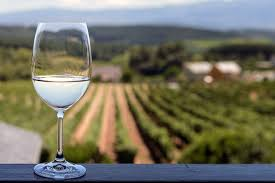 festive white wine in front of vineyard